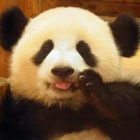 熊猫团子大家族