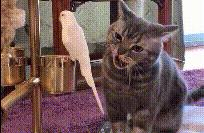 100张搞笑动图:猫咪,不要再看了,这只鸟你不能吃的