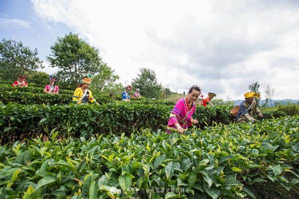 即溶普洱茶珍的功效有哪些呢