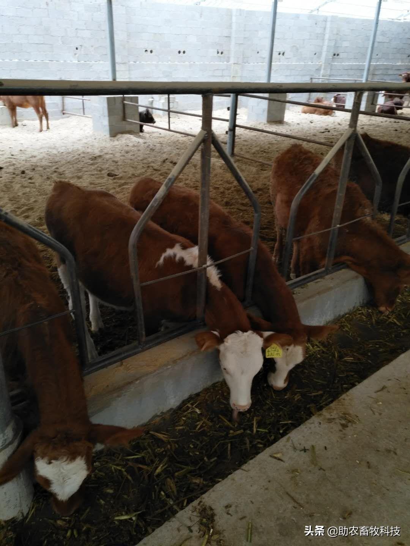 10头牛棚设计图片大全