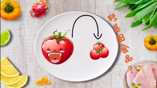 圣女果和西红柿一样吗,圣女果是西红柿转基因的吗