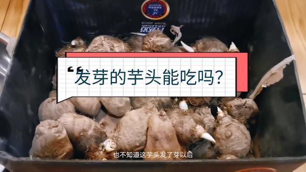 芋头常温保存多长时间,芋头发芽了还能不能吃