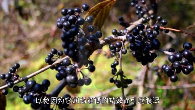 农村常见的5种野果,有些老农都吃过,看看您... - 惠农网触屏版