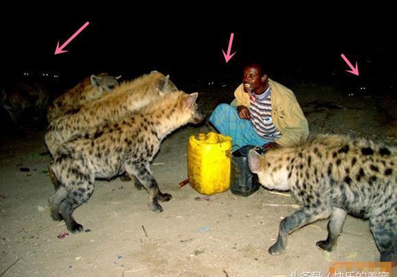 非洲十霸——动物界的掏肛杀手斑鬣狗