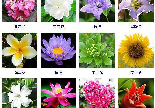 100种沙漠绿植