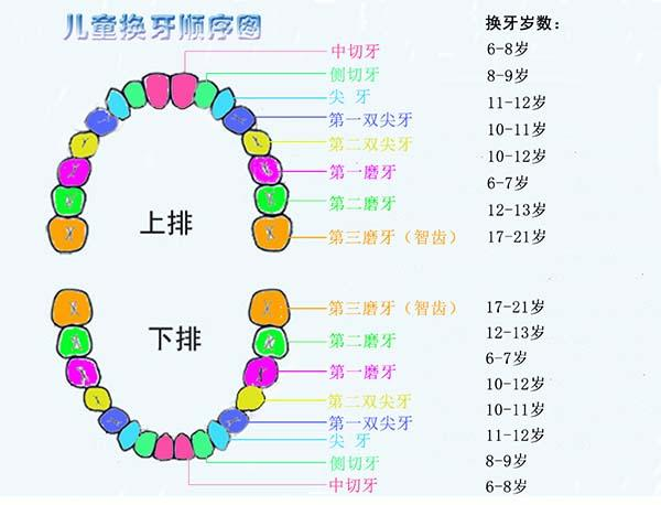 儿童换牙顺序图20颗