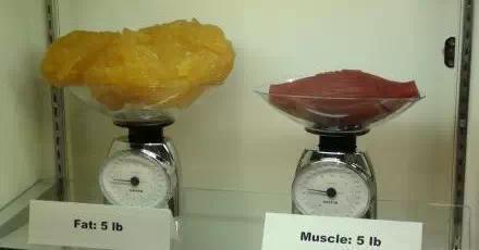 脂肪和瘦肉对比图