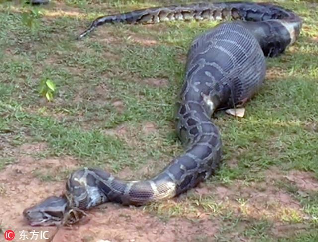 恐怖蟒蛇图片大全大图