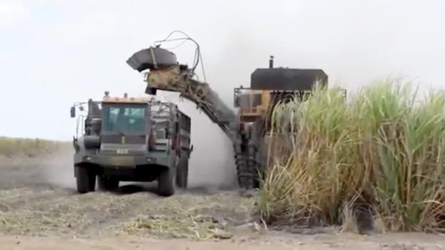 实拍国外农场如此收割甘蔗全过程,看完之后涨姿势了