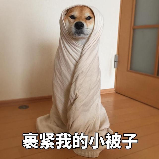 日了狗了的爆笑图片集锦