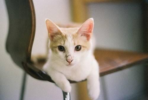 萌貓圖片大全可愛