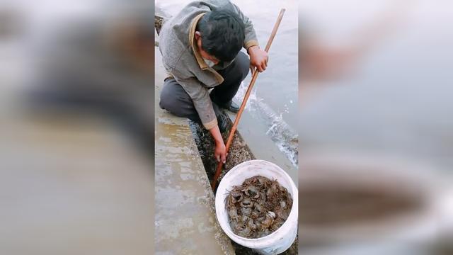 海螃蟹-百科