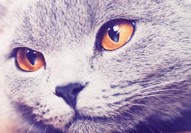 貓圖片高清手機壁紙