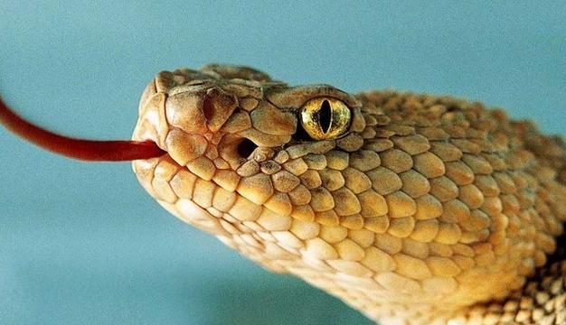 梦见大蛇被别人杀死