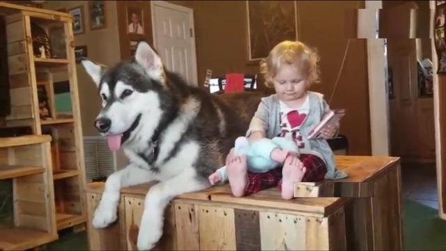狗狗和小主人的日常,能把人笑晕,太好玩了!