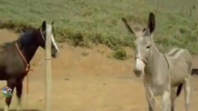 人与动物真实纪录片