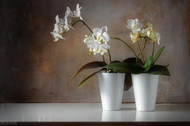 101种室内常见盆栽花卉,治愈又减压,一起养起来!