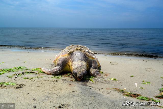 梦见大海龟 周公解梦之梦到大海龟_祥安阁风水网