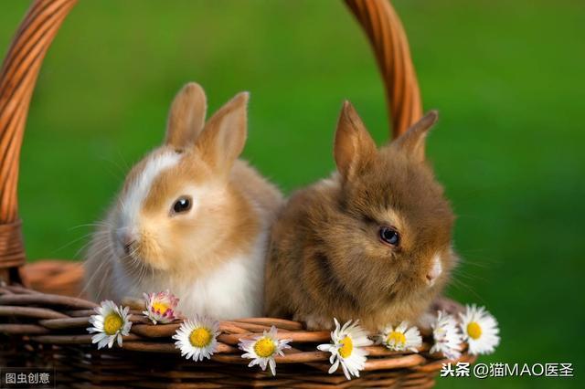 我不是皮卡丘,我没有十万伏特,我是鼠兔,我属兔!
