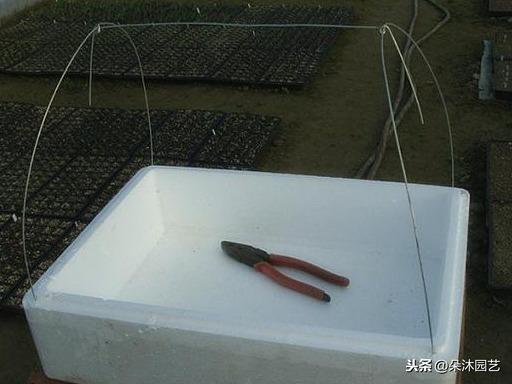 杂暖还寒?DIY泡沫盒小小温室暖棚吧!