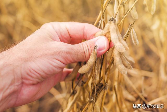 大豆种植技术及病虫害防治,看完这些,你就全明白了!