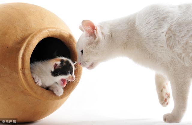 猫不开心时,铲屎官别增加猫的压力,避免3种与猫接触方式-第2张图片-深圳宠物猫咪领养送养中心