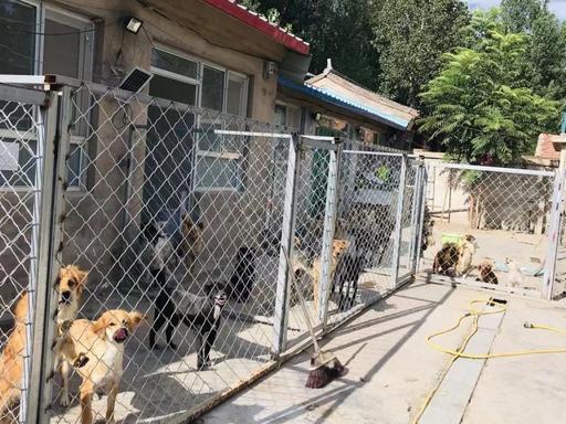 北京市一救助站紧急腾退 多部门联手帮忙250... _手机中国西藏网