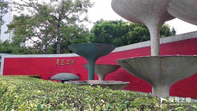 深圳湾公园图片