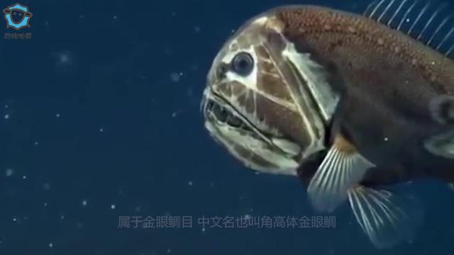 """海洋中的食人鱼,被称为""""食人魔鱼"""""""