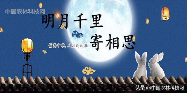 秦时明月手机壁纸