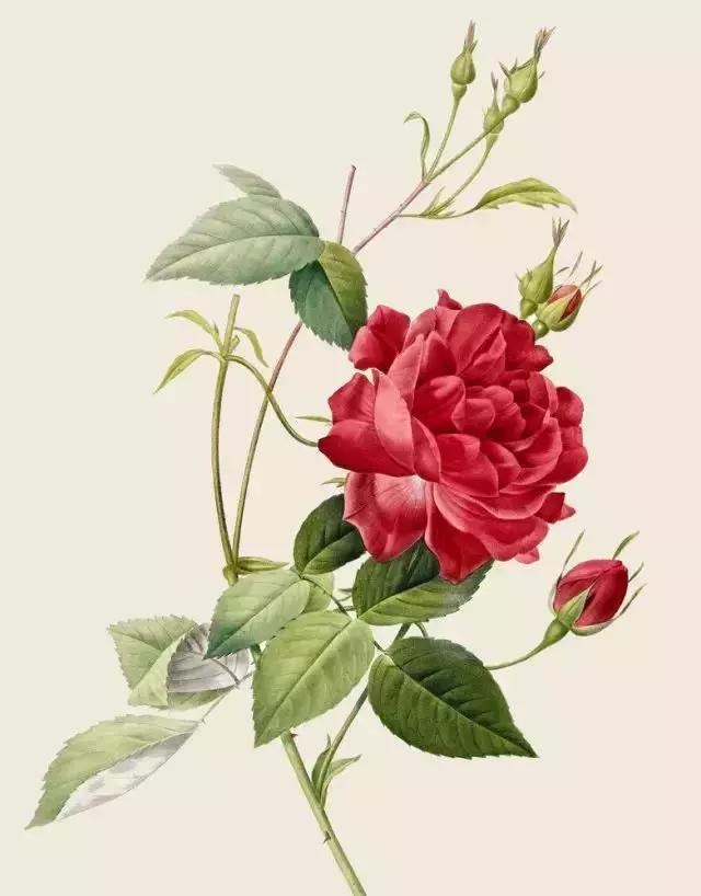 手绘植物装饰画图片-漫画素材-百图汇素材网