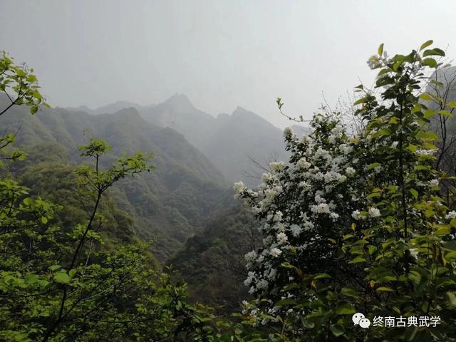 """柘树--移栽了几十棵在我国有着""""南檀北柘""""... - 中国木工爱好者"""