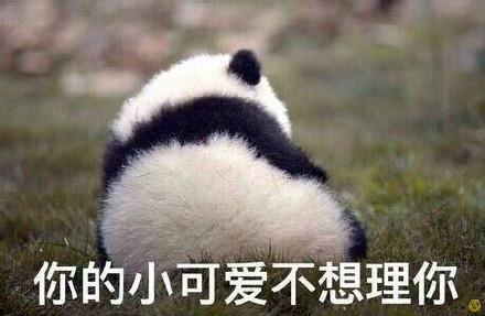 大熊猫动态表情包