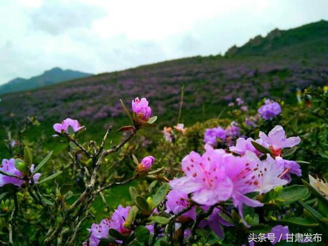 航拍甘肃兰州永登开心农庄花海,真的太美了!