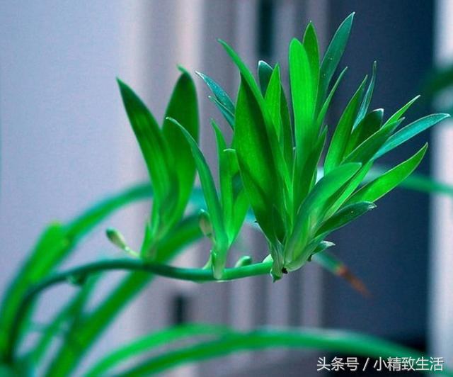 世界十大净化空气植物 - 花百科