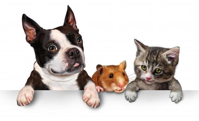所有宠物犬的图片大全