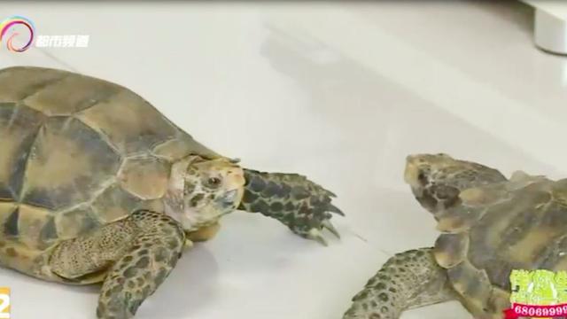 有人在门口摆了三只乌龟,据说很吉利   上海风水散记