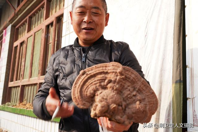 """山西农民大叔山上捡到野生""""大灵芝"""",网友说价值3万,啥样子"""
