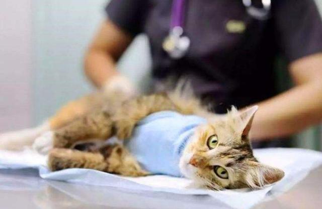 猫咪在家里上蹿下跳,这是天性使然,铲屎官可千万别去改变它们-第11张图片-深圳宠物猫咪领养送养中心