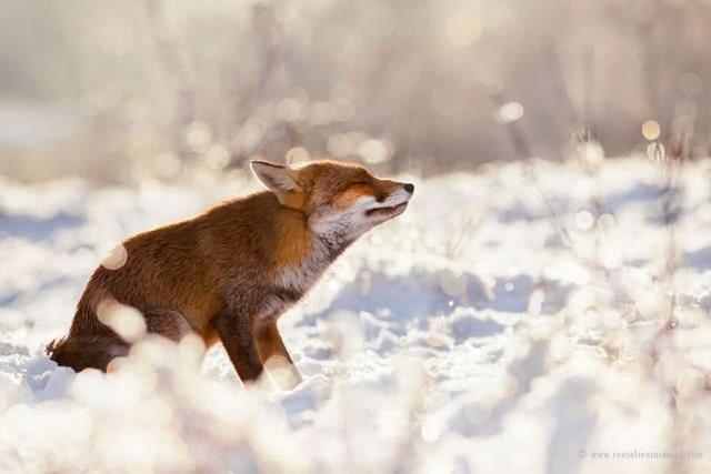 狐狸头像动漫