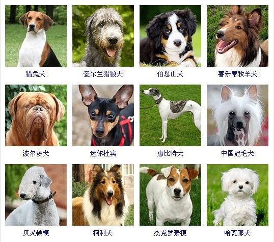 小狗图片_小狗图片大全_463张 (天堂图片网)