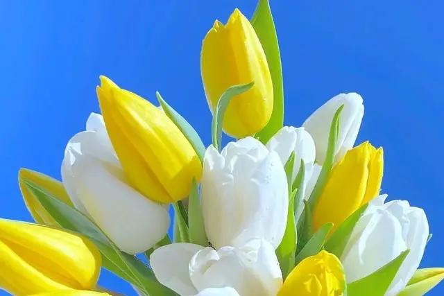 手机壁纸花朵唯美