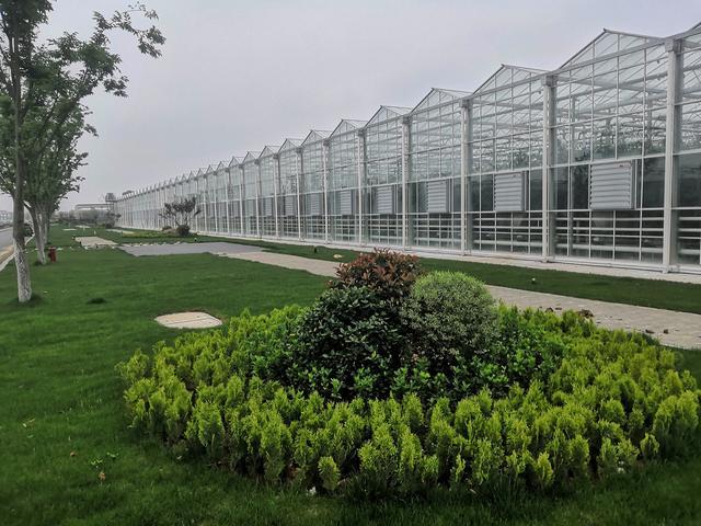 纯种植玻璃温室大棚可以怎么设计