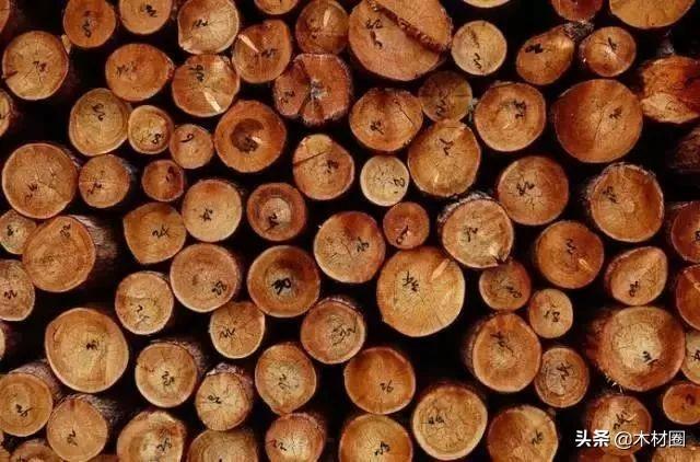 木材树种名称中英文、拉丁文对照_木业技术中心_中国木业信息网