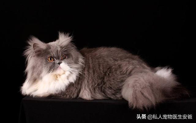 猫咪的品种-第4张图片-深圳宠物猫咪领养送养中心
