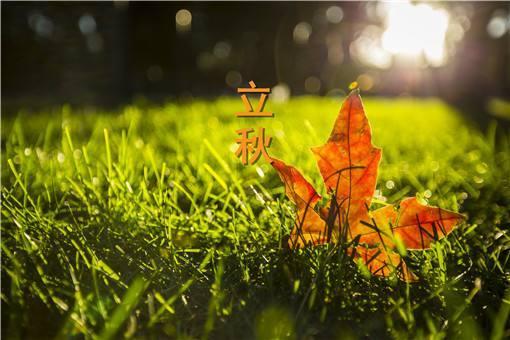 二十四节气立秋图片