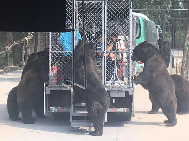北京野生动物园官网