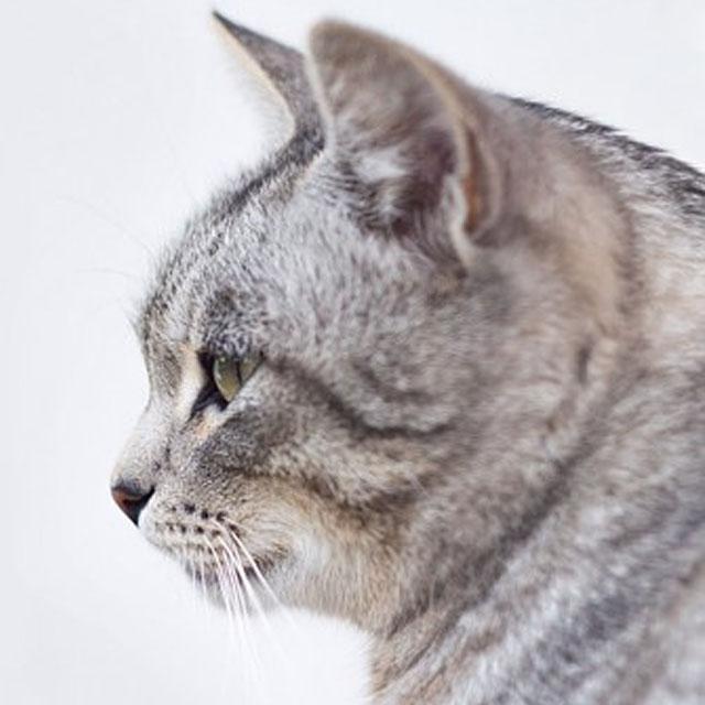招财猫头像高清