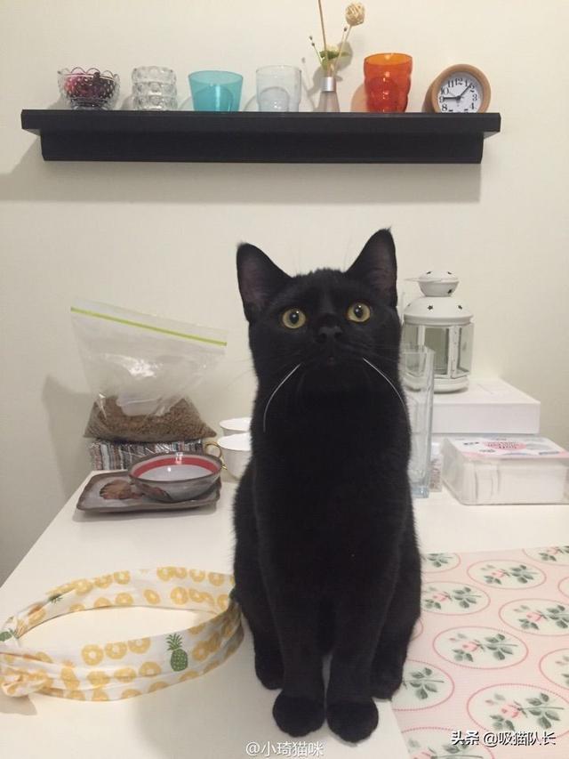 猫的智商到底能有多高?看网友家小黑猫的神操作吧-第2张图片-深圳宠物猫咪领养送养中心