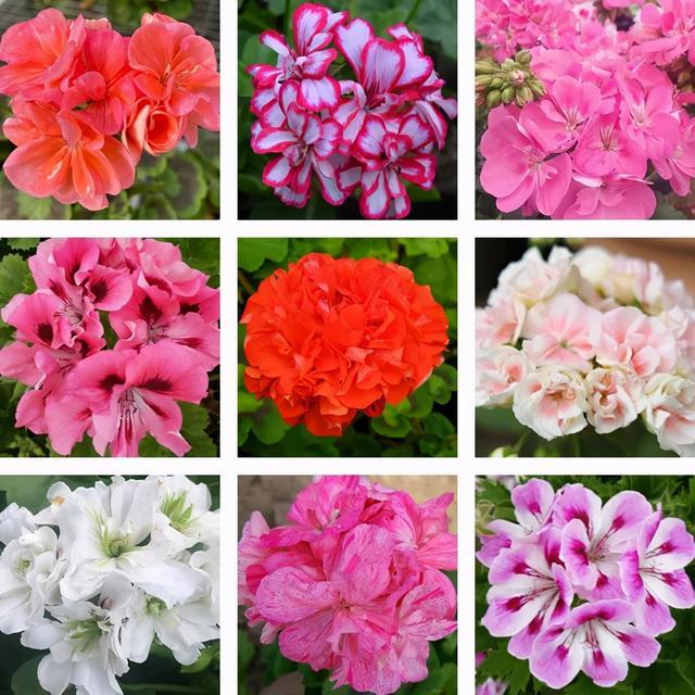 常见花卉盆栽100种